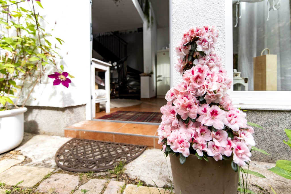 Blumen_3710
